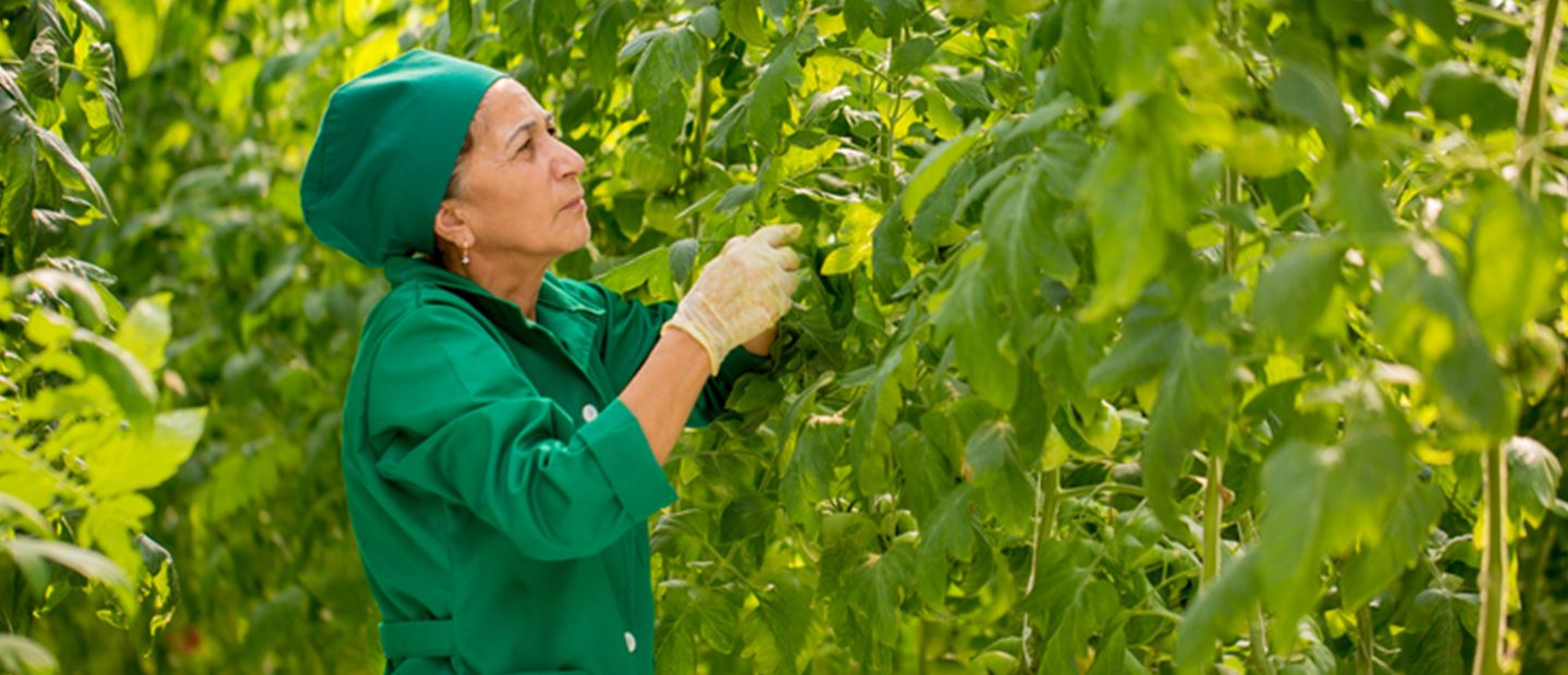 Grow more vegetables while meeting strict environmental standards, Azerbaijan - Netafim